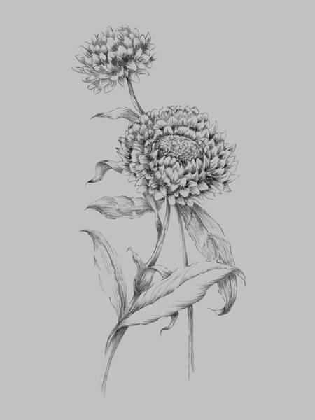 Love Mixed Media - Flower Drawing 3 by Naxart Studio