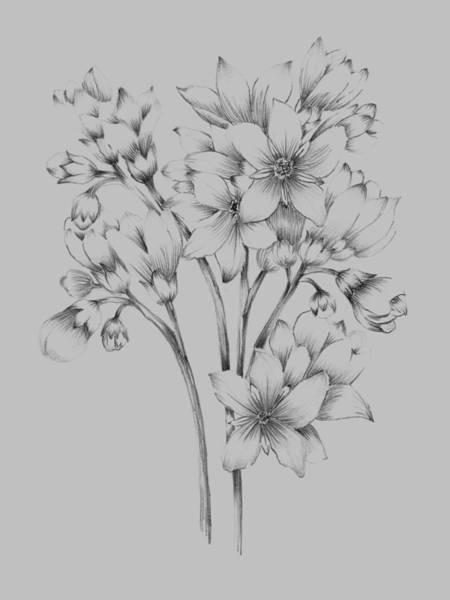 Love Mixed Media - Flower Drawing by Naxart Studio
