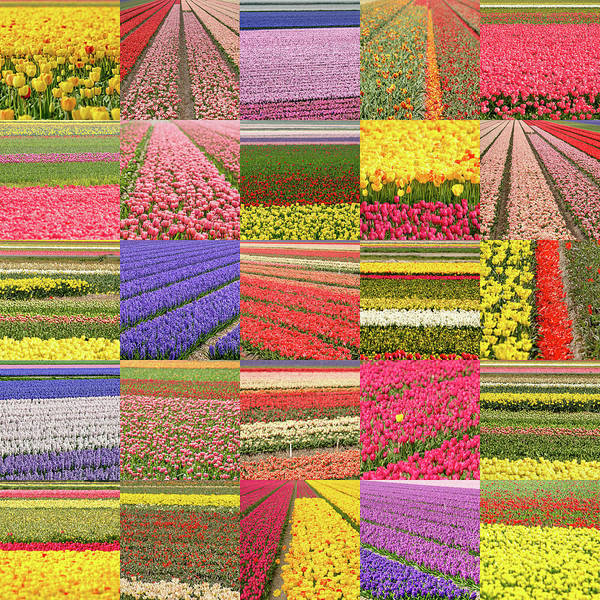 Photograph - Flower Field Collage by Frans Blok