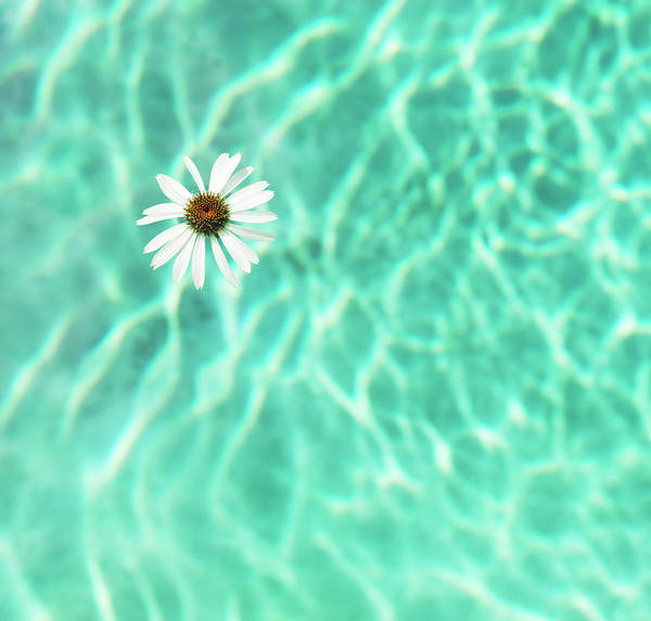 Wall Art - Photograph - Flower Floating In Swimming Pool by Henrik Weis