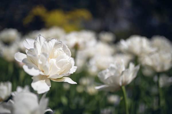 Photograph - Flower Fun by Brian Hale