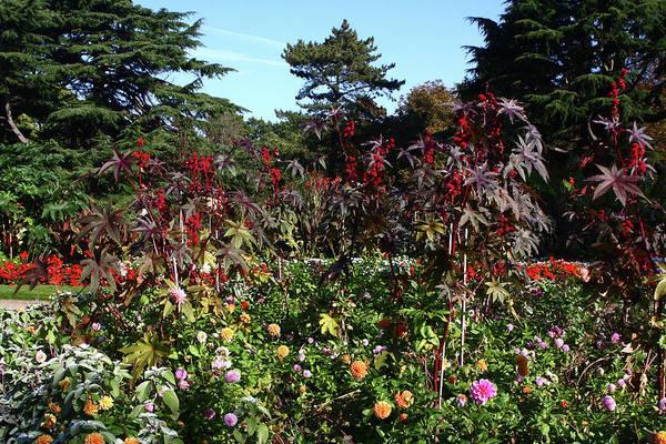 Photograph - Flower Garden At Greenwich Park by Aidan Moran