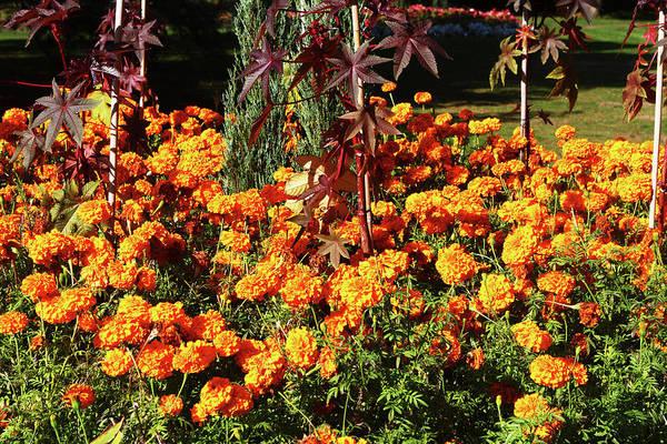 Photograph - Flower Garden At Greenwich Park, London by Aidan Moran
