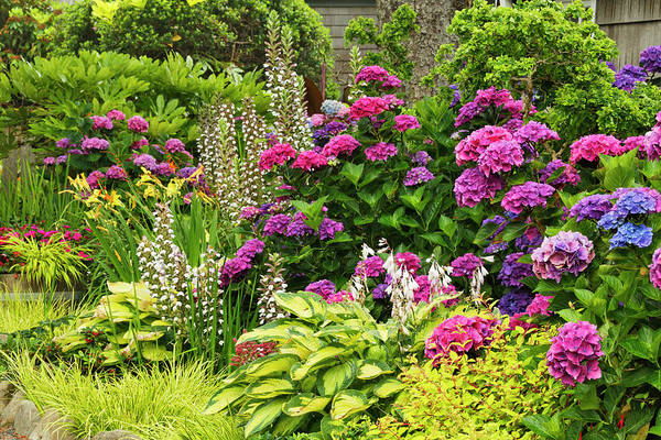 Wall Art - Photograph - Flower Garden, Cannon Beach, Oregon by Adam Jones