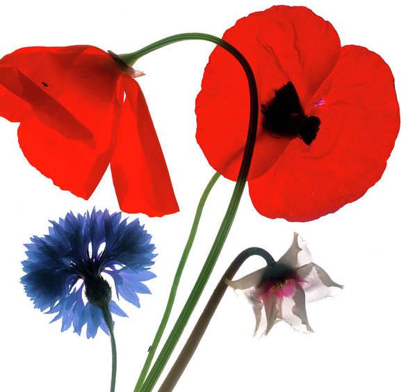 Cut-out Digital Art - Flower Illustration by David Provost