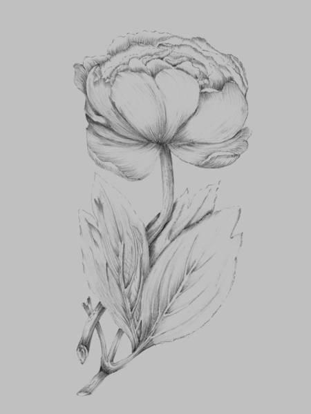 Love Mixed Media - Flower Illustration I by Naxart Studio