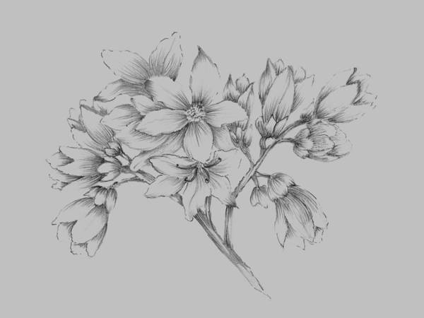 Love Mixed Media - Flower Illustration by Naxart Studio