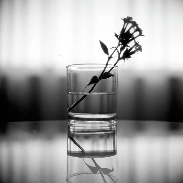 Water Bottle Wall Art - Photograph - Flower In A Bottle by Photography By Bert.design