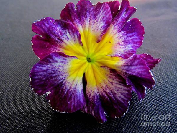 Photograph - Flower In A Garden  by Joyce Woodhouse