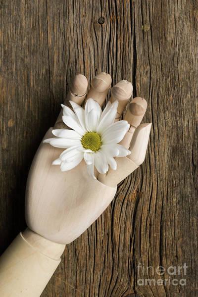 Wall Art - Photograph - Flower In Wooden Hand by Edward Fielding