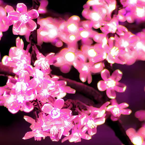 Flower Lights 9 Art Print