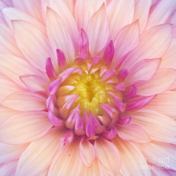 Wall Art - Photograph - Flower Macro by Danielo