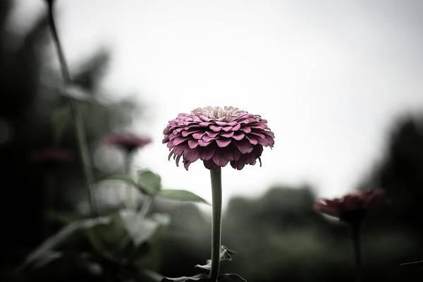 Wall Art - Photograph - Flower by Matthew Blum