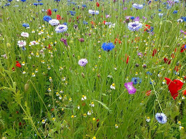 Photograph - Flower Meadow by Elizabeth Lock