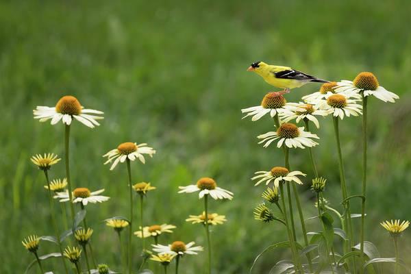Photograph - Flower Perch by Scott Bean