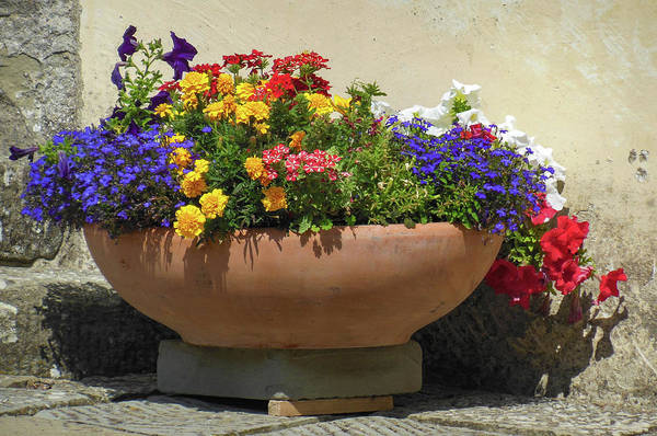 Wall Art - Photograph - Flower Pot In The Abbey by Dimitris Sivyllis