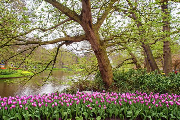 Photograph - Flower Power Keukenhof 2019. Purple Tulips by Jenny Rainbow