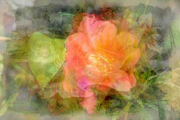 Wall Art - Photograph - Flower Salad by Ches Black