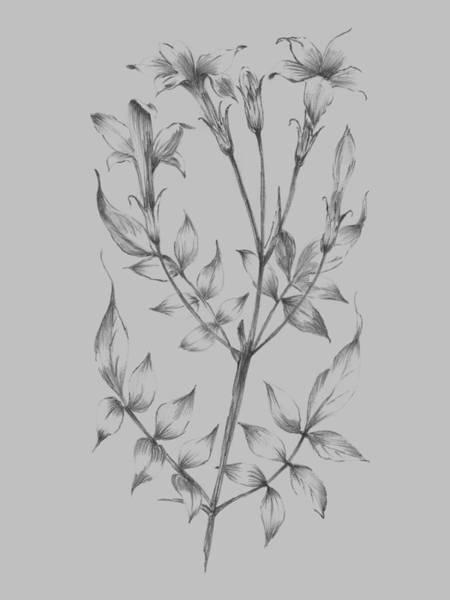 Love Mixed Media - Flower Sketch II by Naxart Studio