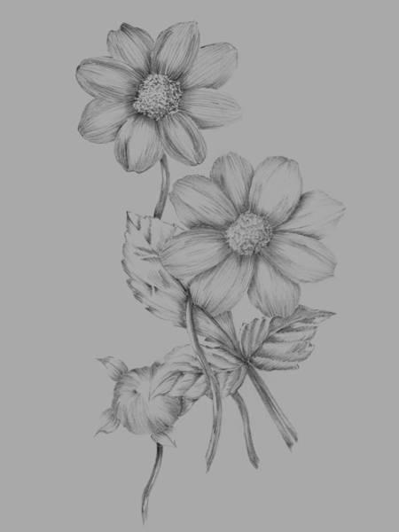 Love Mixed Media - Flower Sketch by Naxart Studio