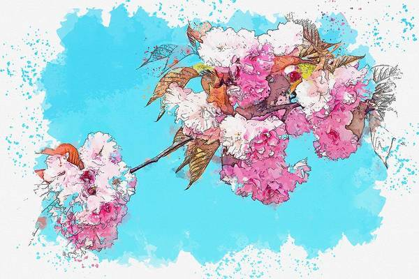 Painting - Flower Tree Plant Nature Cherry Leaves Garden -  Watercolor By Adam Asar by Adam Asar