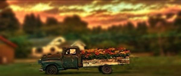 Wall Art - Photograph - Flower Truck by Photo Crane