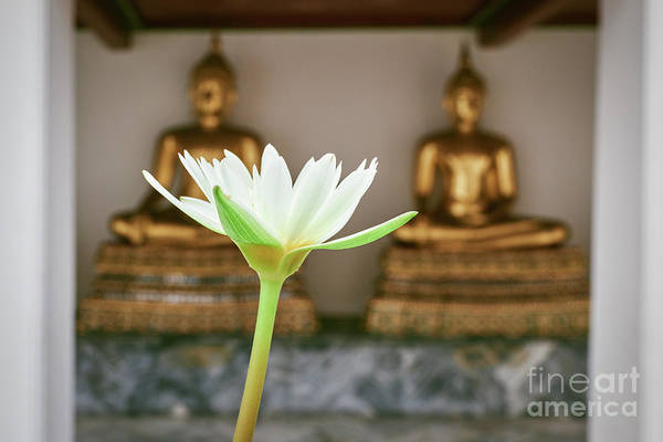 Wall Art - Photograph - Water Lily With Buddhas by Dean Harte