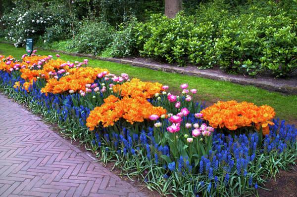 Wall Art - Photograph - Flowerbed In Keukenhof Gardens With Orange Tulip Orca by Jenny Rainbow