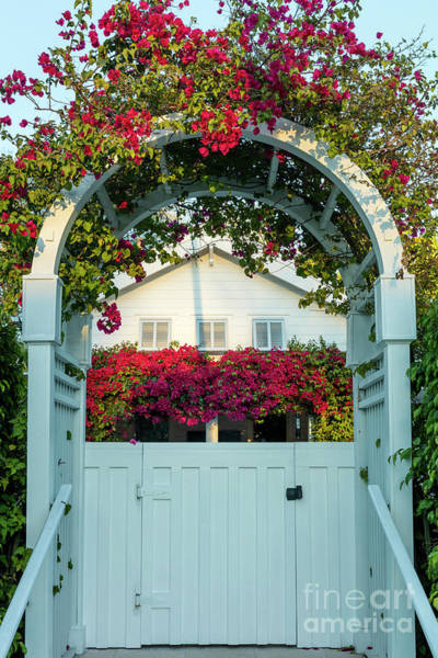 Photograph - Flowered Entry Naples Florida by Brian Jannsen