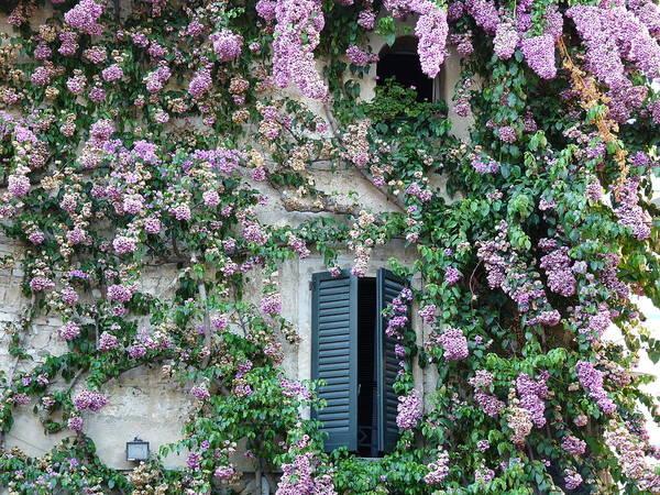 Bougainvillea Photograph - Flowered Window In Sirmione by Laura Barrera