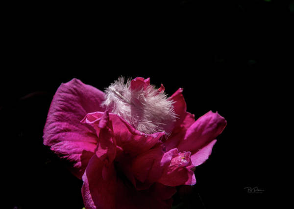 Photograph - Flowerfeather by Bill Posner