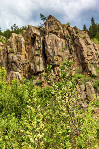 Photograph - Flowering Bush In Waterton Canyon, Colorado by Jeanette Fellows