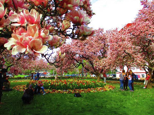 Wall Art - Digital Art - flowering Magnolia by Alex Lim