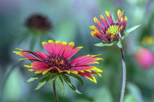 Photograph - Flowers 3607-100918 by Tam Ryan