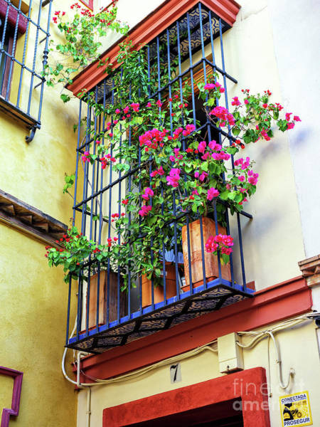 Photograph - Flowers Above The House In Seville by John Rizzuto