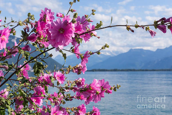 Dark Shadows Photograph - Flowers Against Mountains And Lake by Rtstudio
