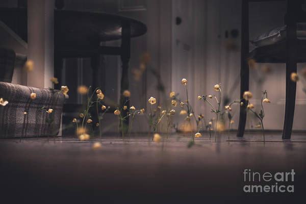 Wall Art - Photograph - Flowers And Floorboards No.2 by Frederick Ardley