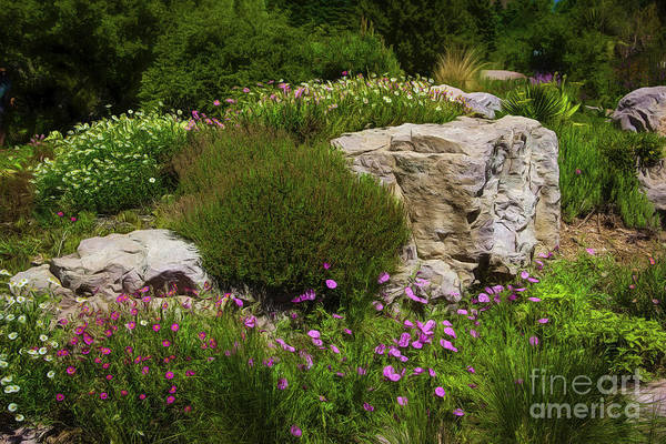 Photograph - Flowers And Rocks by Jon Burch Photography