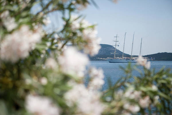 Peloponnese Photograph - Flowers And Sailing Cruise Ship by Holger Leue