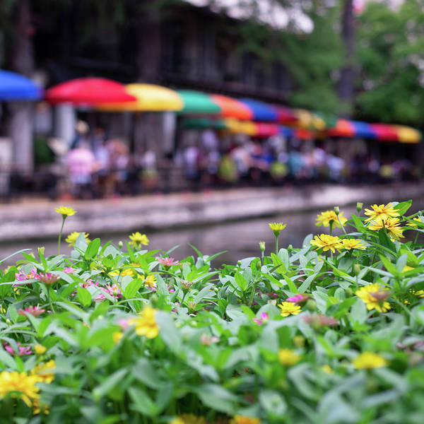 Photograph - Flowers And Umbrellas Along San Antonio Riverwalk 1x1 by Gregory Ballos