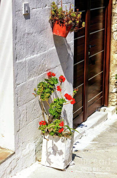 Photograph - Flowers At Ayios Neophytos Cyprus by John Rizzuto