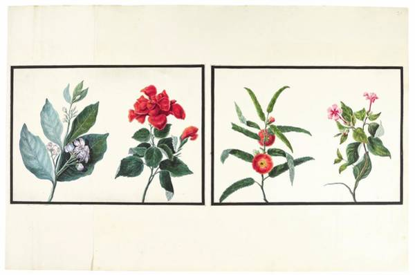Wall Art - Painting - Flowers, Birds, , India, Murshidabad, Company School, Late 18th Early 19th Century by Celestial Images