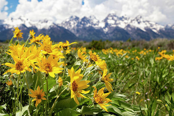 Photograph - Flowers Blooming In The Tetons by Michael Chatt