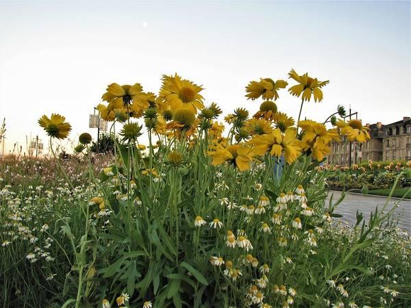 Photograph - Flowers Bordeaux France 1 by Joan Stratton