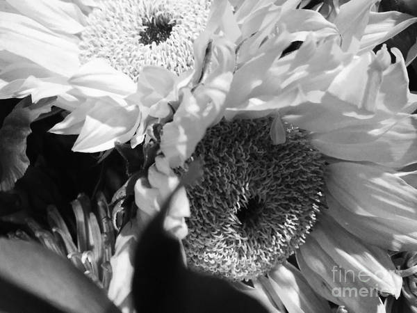 Photograph - Flowers Dark And Light by Robert Knight