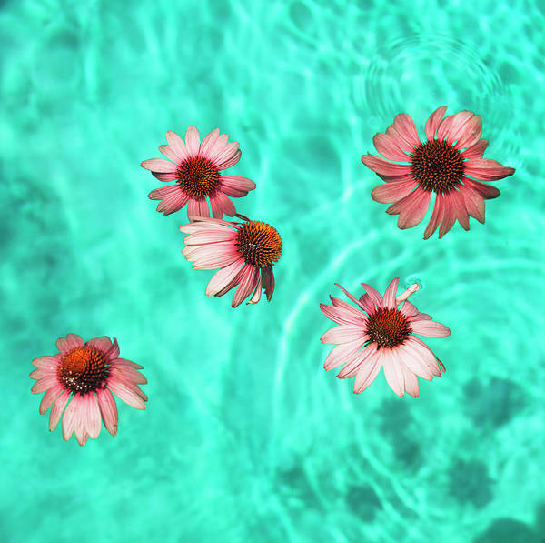 Wall Art - Photograph - Flowers Floating In Swimming Pool by Henrik Weis