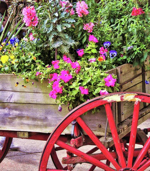 Photograph - Flowers For Sale by JAMART Photography