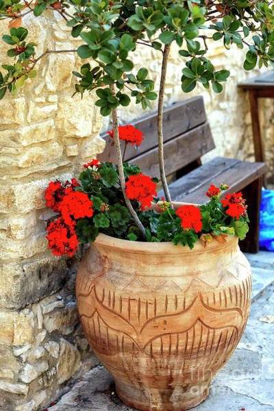 Photograph - Flowers In Cyprus by John Rizzuto