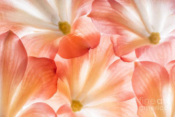 Florist Wall Art - Photograph - Flowers In Detail - Macro Texture by Kuttelvaserova Stuchelova