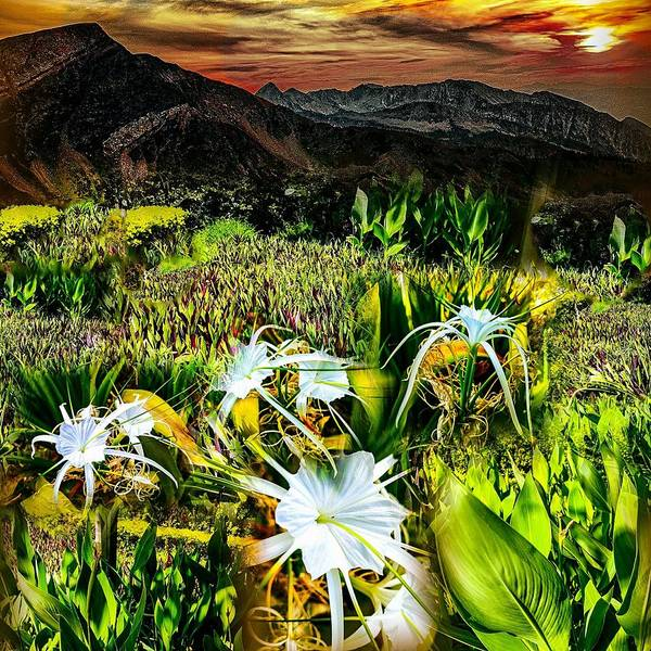 Mixed Media - Flowers In Field by AE collections